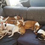 Babysitten Minibulls2